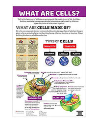 Charts: What Are Cells?