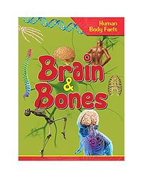 Brain & Bones- Human Body Facts