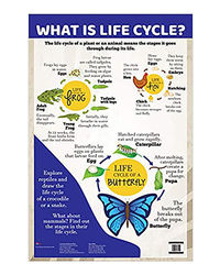 Charts: What Is Life Cycle?