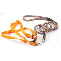 Easypets TRUECHOCIE Dog Leash with Collar (Medium) (Yellow)