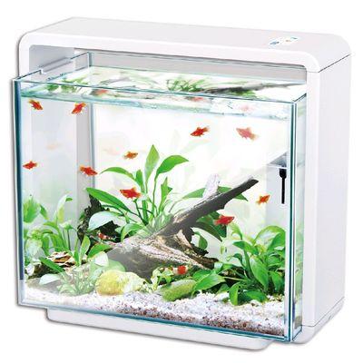 Hailea natur biotop fish tank, e 60
