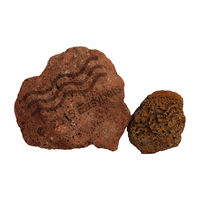 Ocean Free Decoration Volcano Rock 5 Kilogram(Assorted)