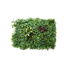 Wild Shrubs Grass, Green