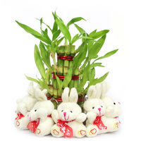 Valentine Plant