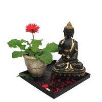 Gerbera Plant N Buddha