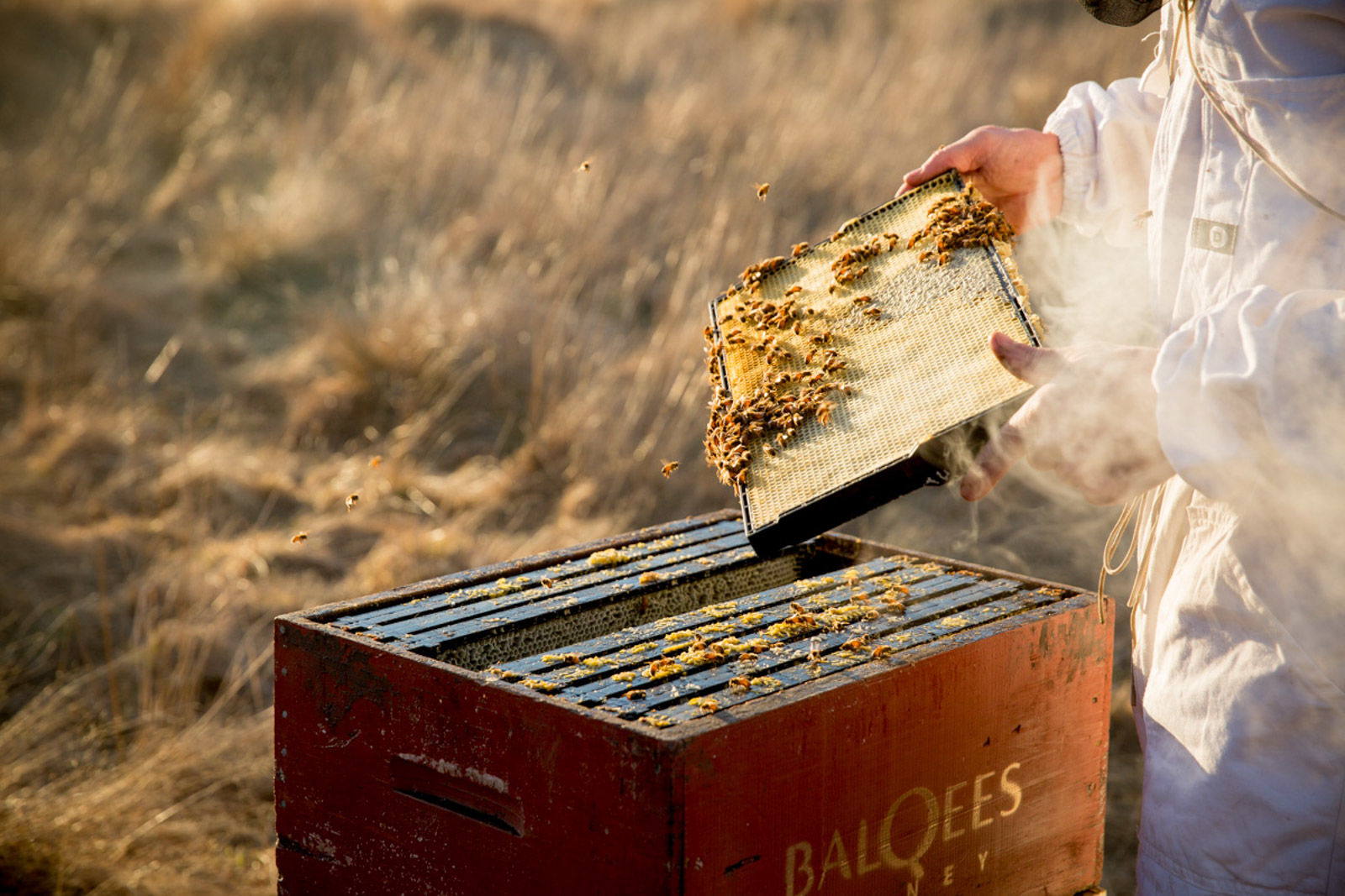 beekeeper holding honeycomb straight from the hive in rural New Zealand